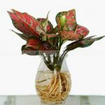 Chọn hoa để bàn làm việc theo phong thuỷ