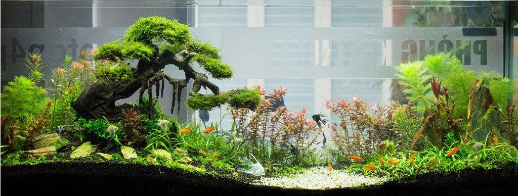 cây trồng trong hồ cá - cây thủy sinh