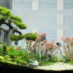 Những loại cây trồng trong hồ cá – cây thủy sinh đẹp và dể trồng