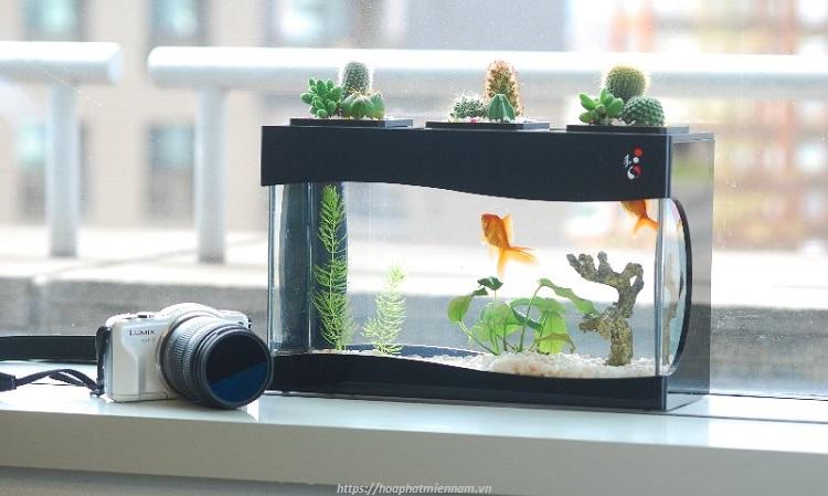 Mẫu bể cá mini giúp tăng sự tuần hoàn, phong thủy