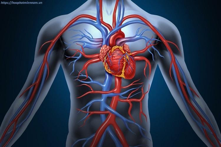 Yếu tố tuần hoàn máu được cải thiện ít nhiều với tư thế ngồi bệt