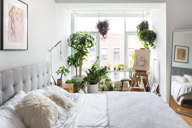 Trang trí cây xanh trong phòng ngủ nhỏ cho phái nữ giúp tinh thần của bạn được thư thái hơn nhiều