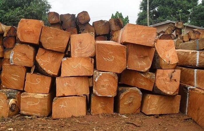 Cây gỗ Gụ được dùng nhiều trong đóng bàn ghế, tủ gỗ gia đình