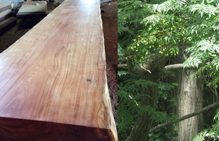 Xoan Đào thường được ưa chuộng trong sản xuất thủ công các mẫu bàn ghế phong khách lớn