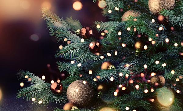 Cây thông là linh vật không thể thiếu trong dịp Noel
