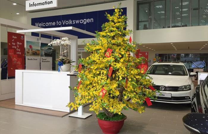 Hoa Mai trang trí trong một cửa hàng bán xe