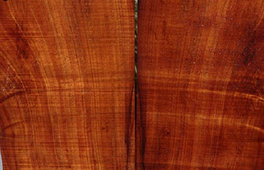 nhận biết gỗ lim bằng dăm gỗ