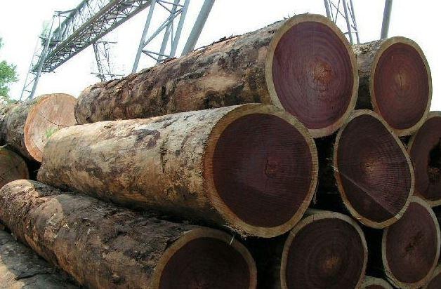 ưu điểm gỗ lim