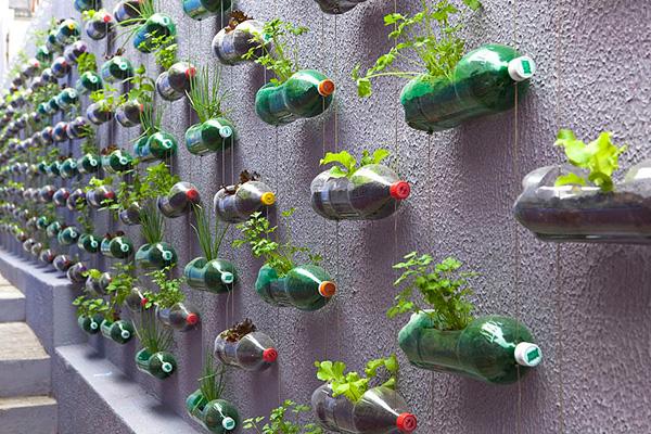 Trồng cây trang trí với chai nhựa bỏ đi