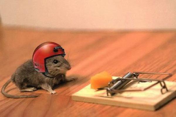 Chuột và các loại côn trùng nhỏ như bọ, gián gây nên mùi hôi khó chịu